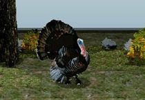 Охотник на индейку 3Д