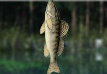 Рыбалка в озере 2