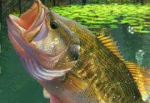 Рыбалка на озере: зеленая лагуна